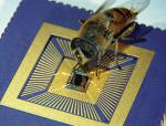 A hoverfly and a computer chip  seeing eye to eye Photo by David O'Carroll