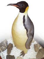 Emperor Penguin, <i>Aptenodytes forsteri</i>
