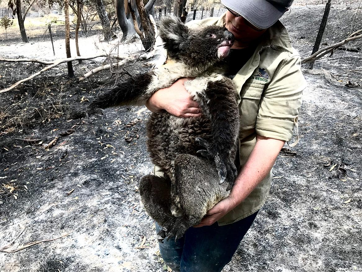 Jane Brister with Koala in Bushfire affected region