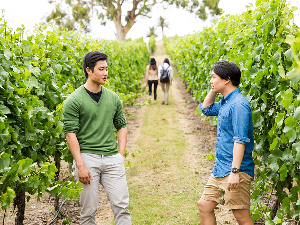 Two men talking in a vineyard