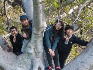 ELC students climbing a tree