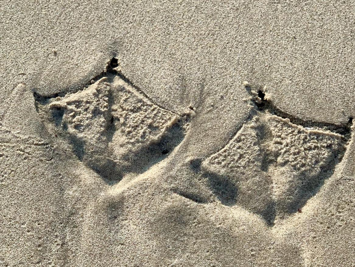 Seagull footprints on beach