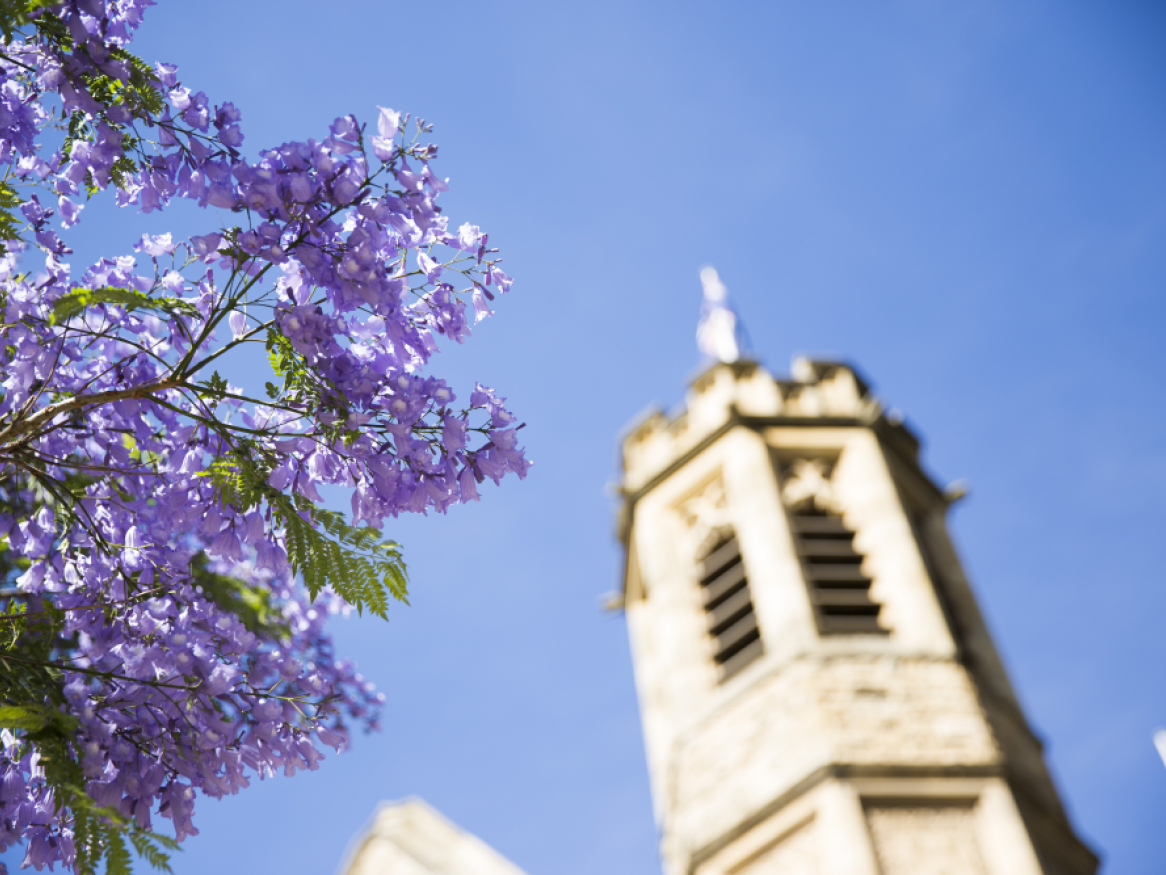 A building on the North Terrace campus with a flowering jacaranda tree in the foreground