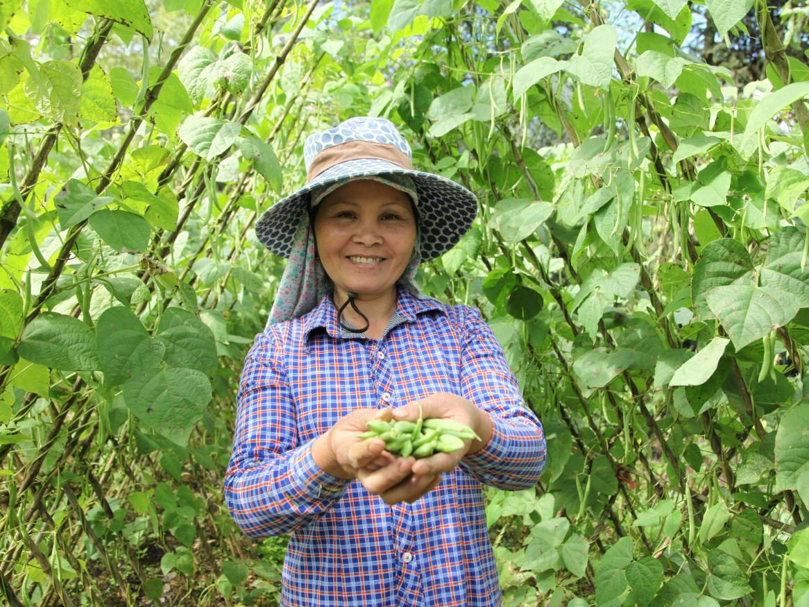 Towards more profitable and sustainable vegetable systems in north west Vietnam