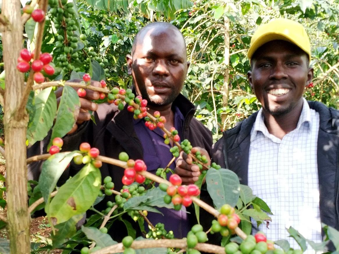 Project enumerator, Julius Njoke, with coffee farmer, Sam, in his garden while looking at shade trees spacing, ground cover and soil conservation measures.