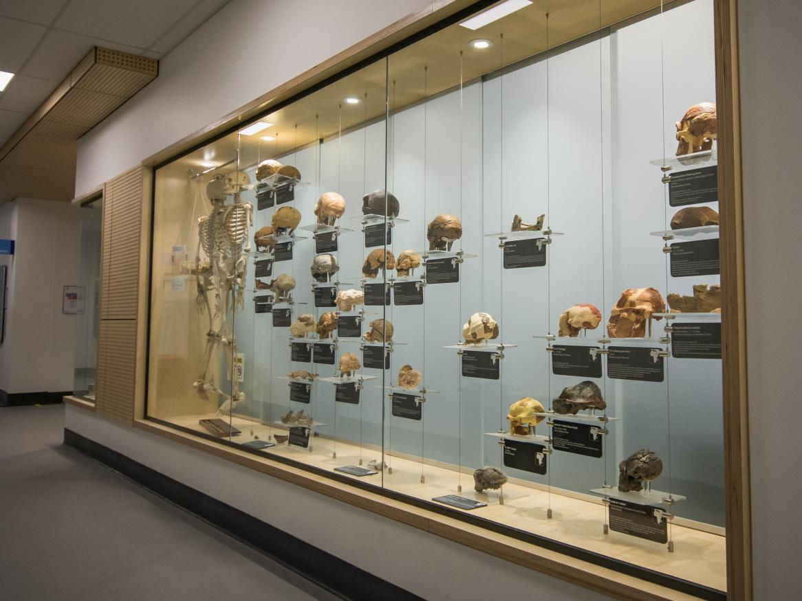 Photo of the outwards-facing museum display wall