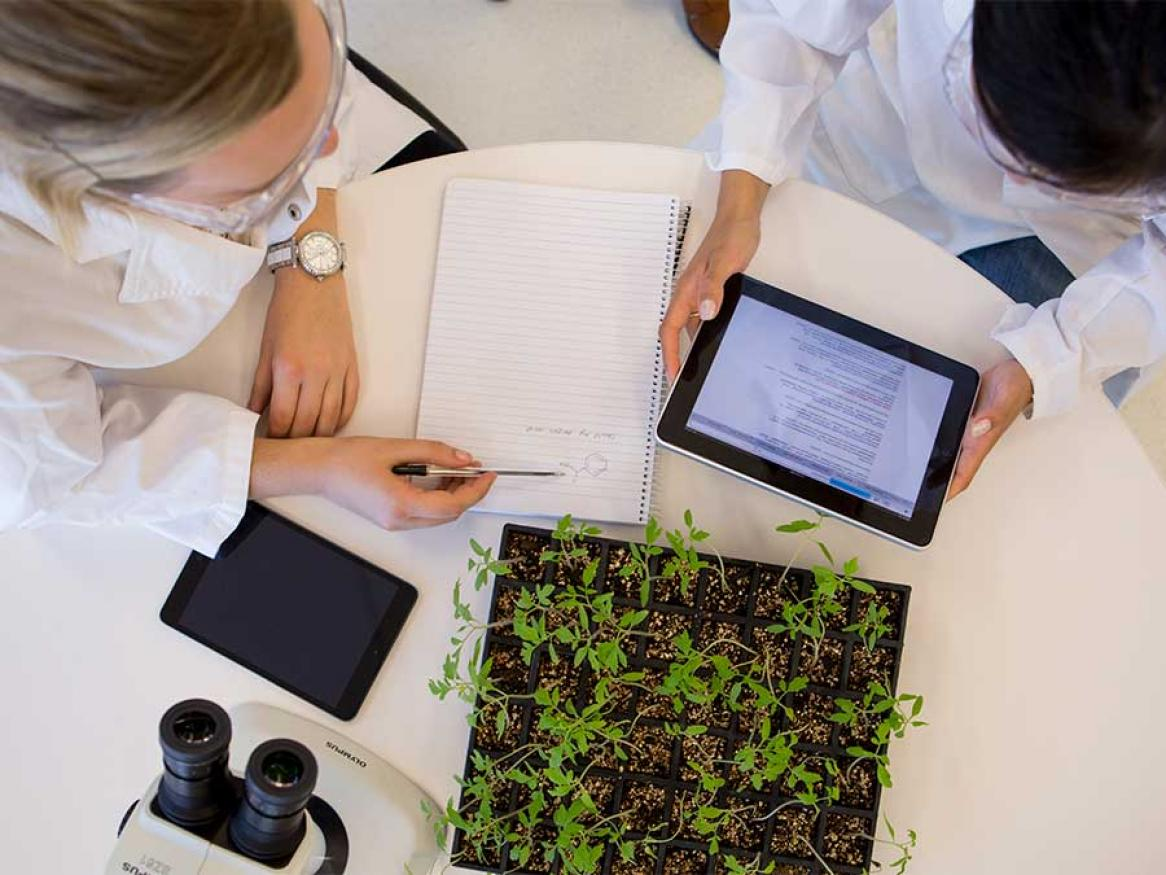 Plant Synthetic Biology