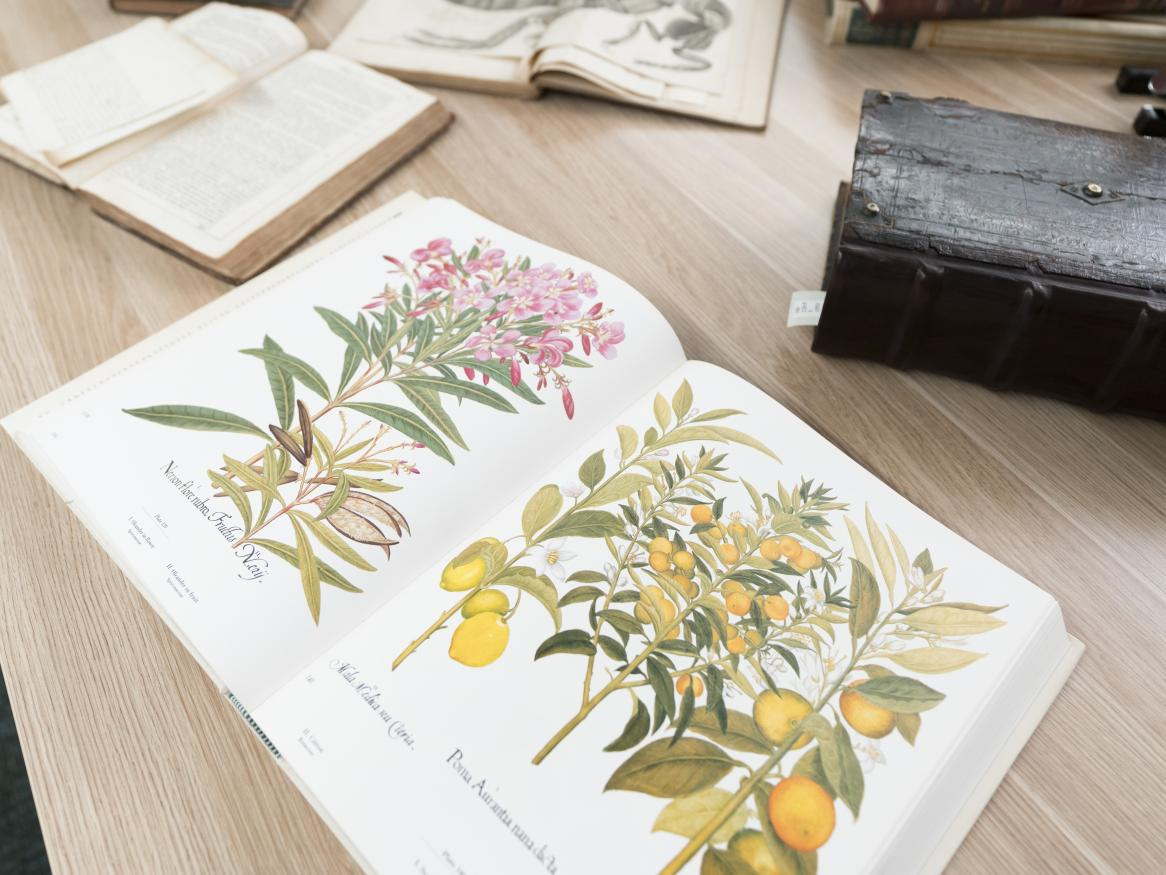 Photo of botanical drawings in an old book