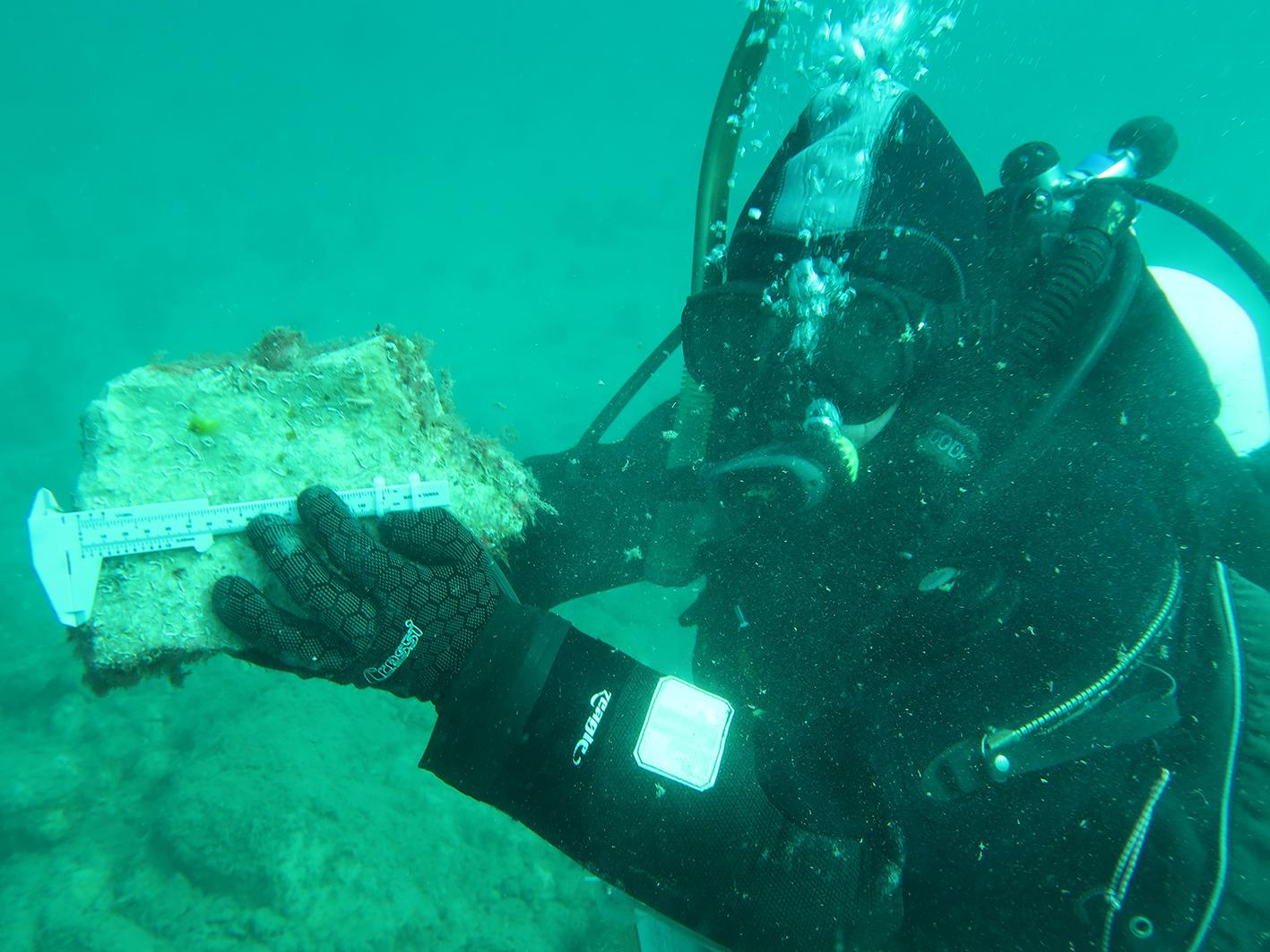 Underwater oyster reef research