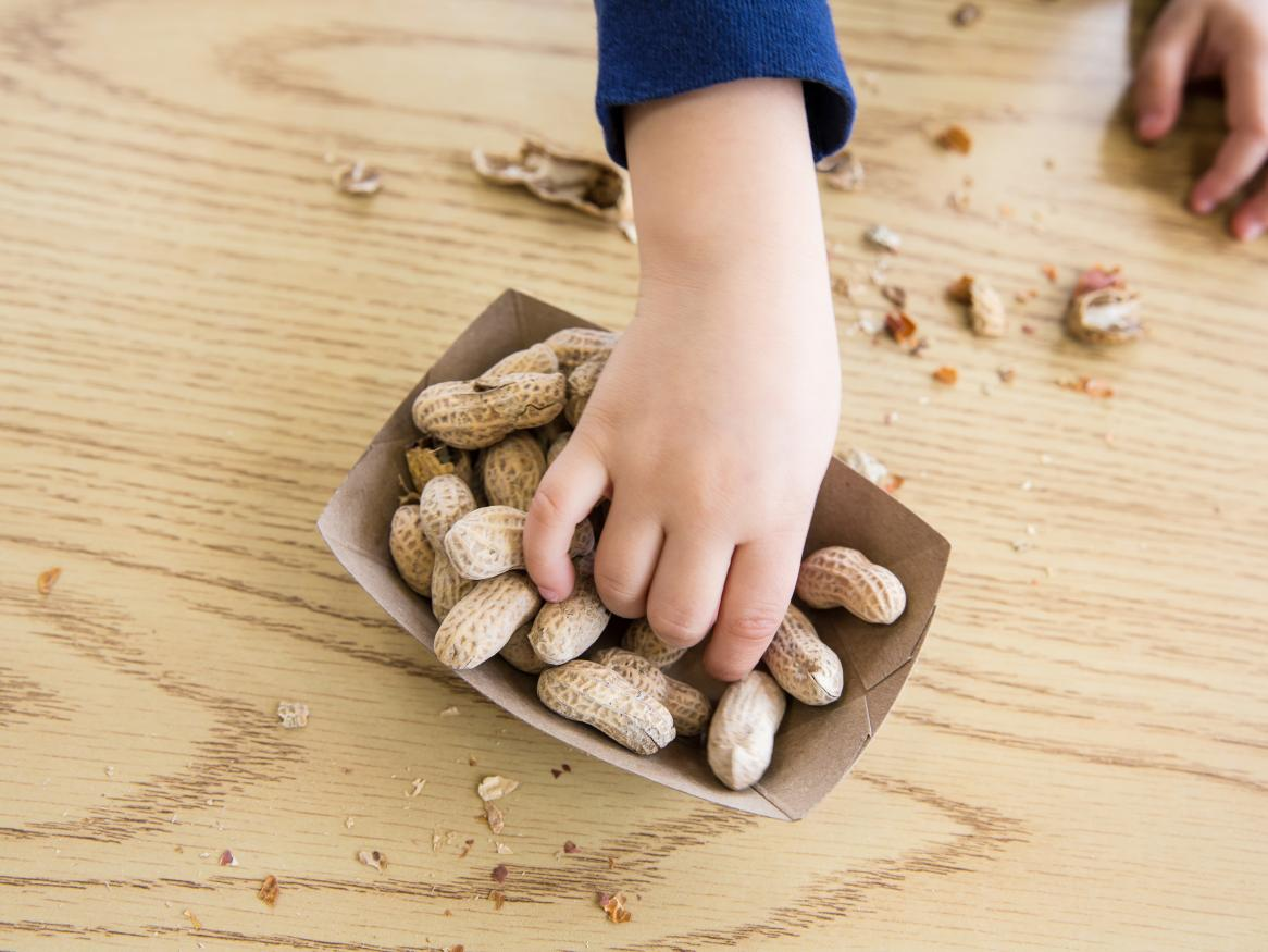 Peanut allergy treatment can be safer with appropriate cotreatments