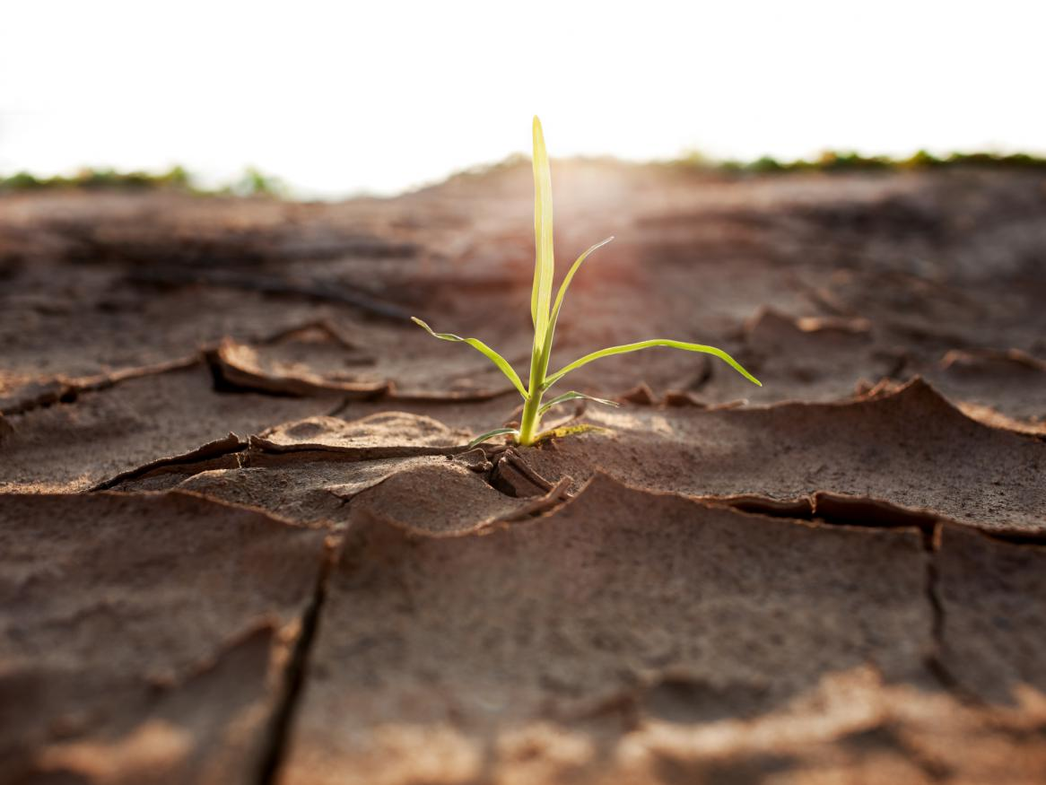 A plant shoot growing through dry earth