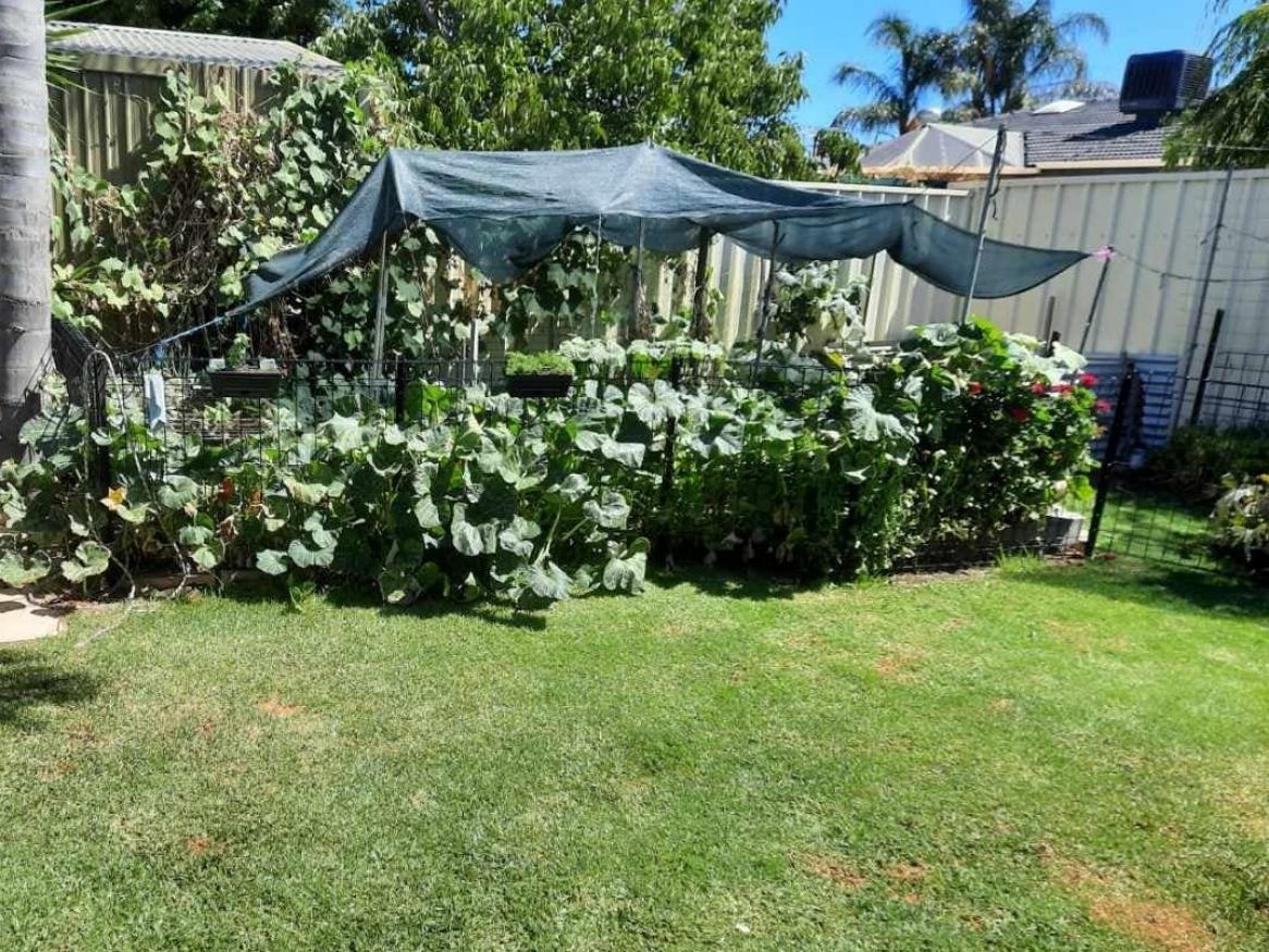 Back yard in Adelaide's south west demonstrates having a lawn and growing a self-sustainable vegetable supply