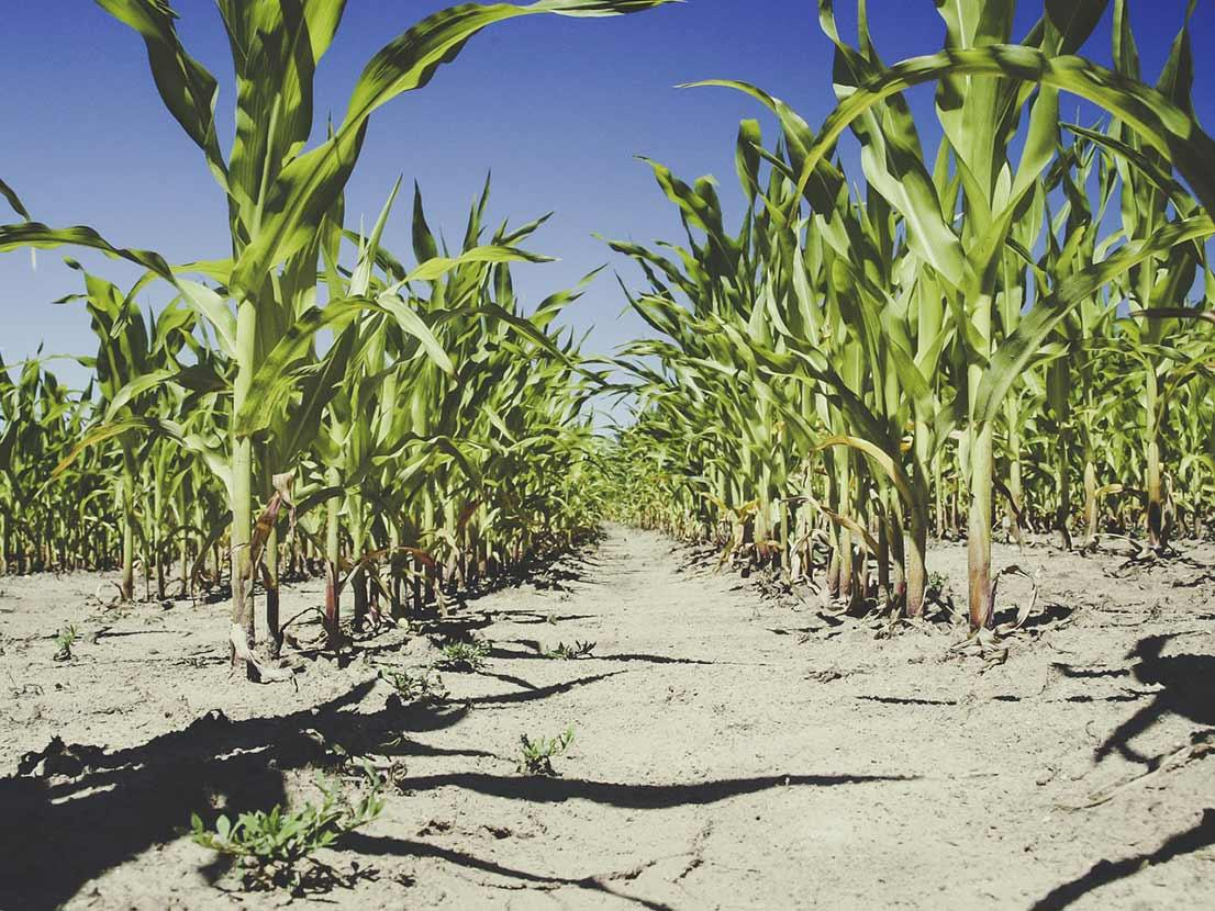 Finding food security in a changing climate