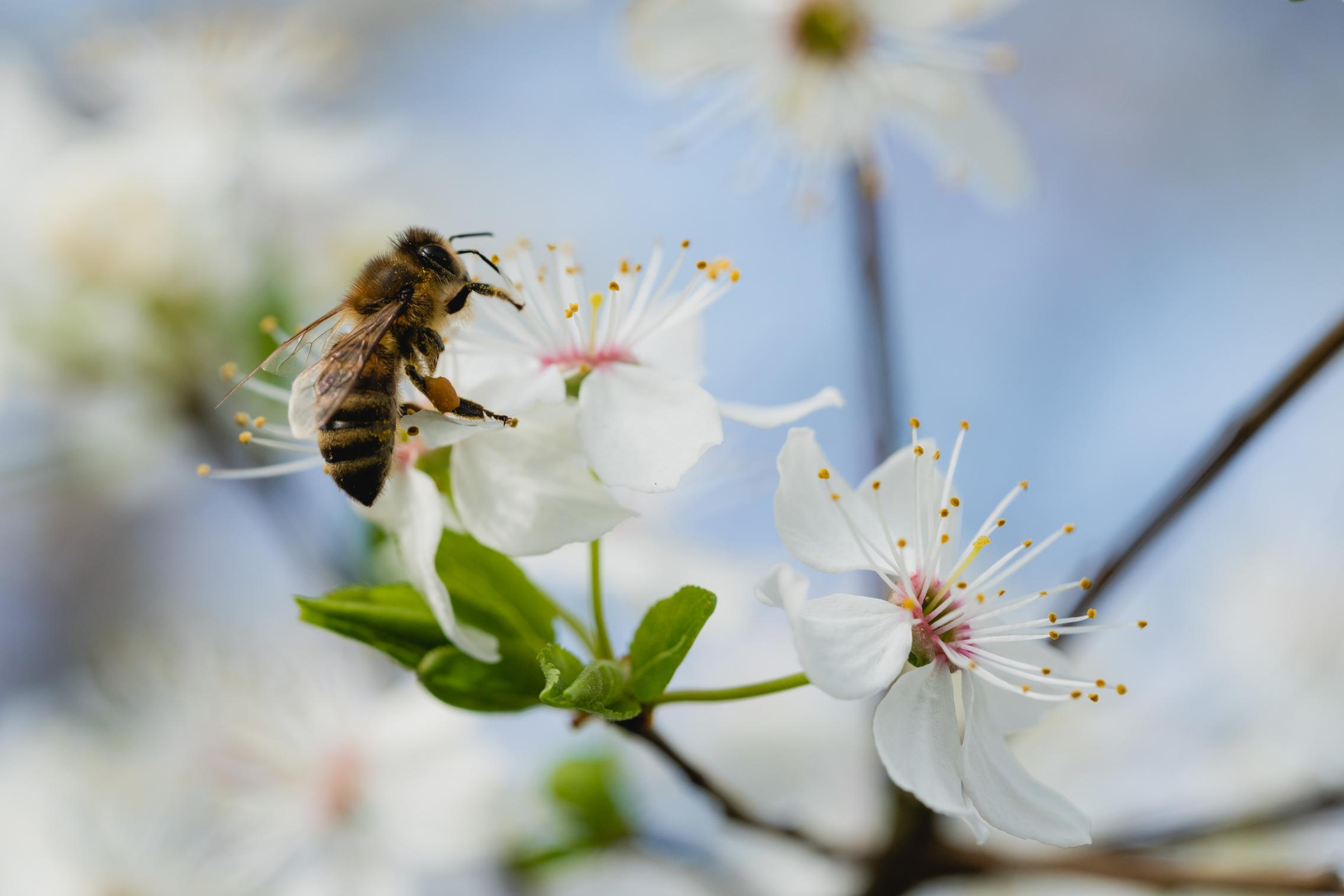 Protecting crops by preserving their pollinators