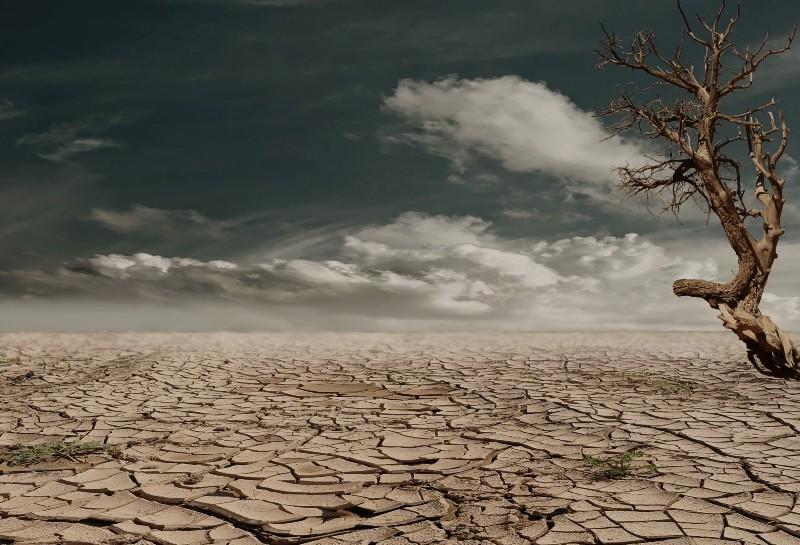 Dry desert scene with tree