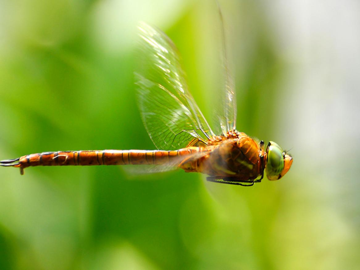 Dragonfly technology provides pinpoint accuracy and super speed