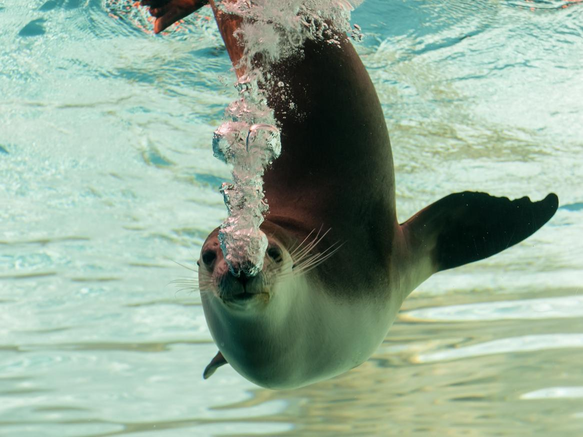 seal swimming image - links to exercise page