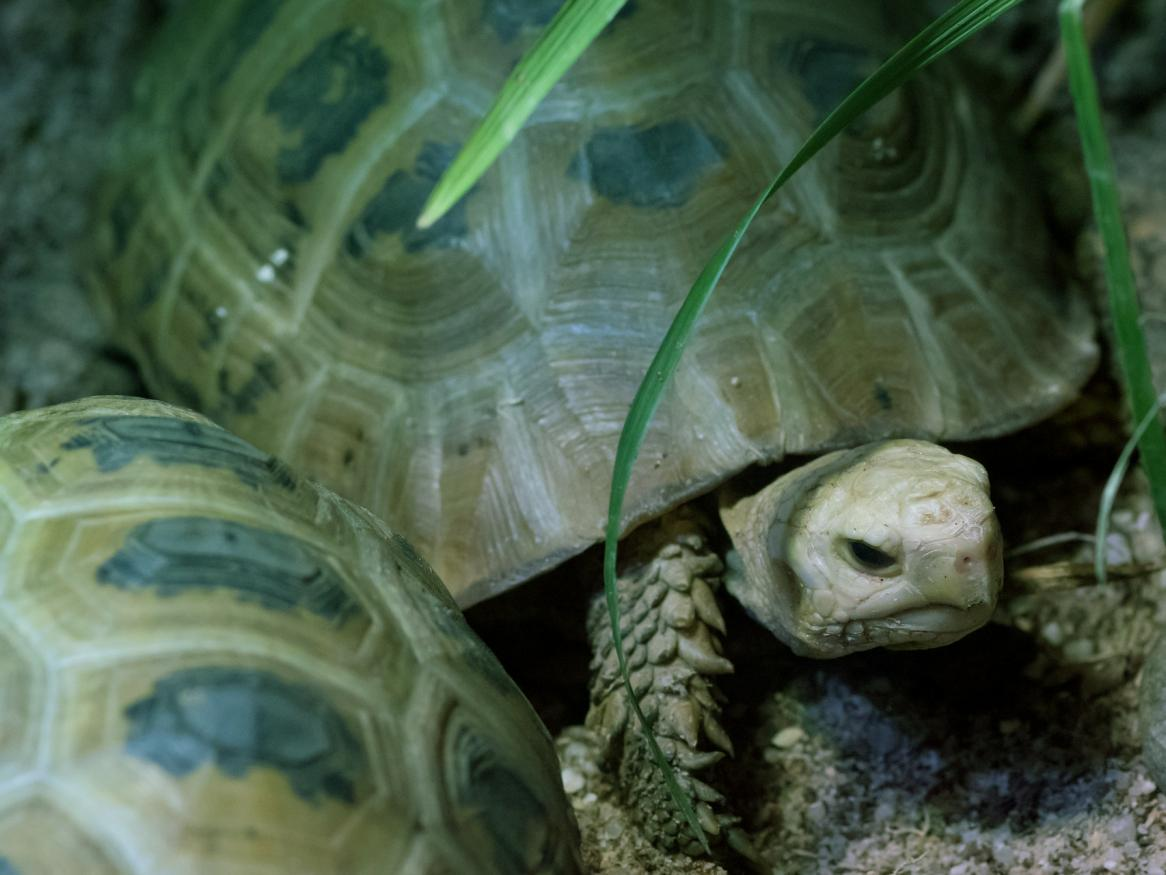 turtle image - links to body image page